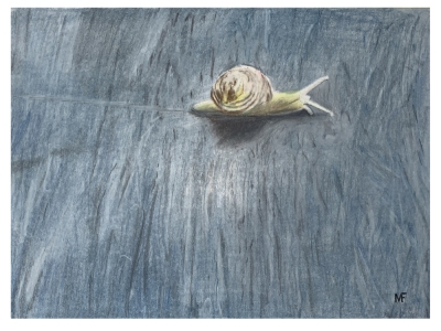 Snail on Shale